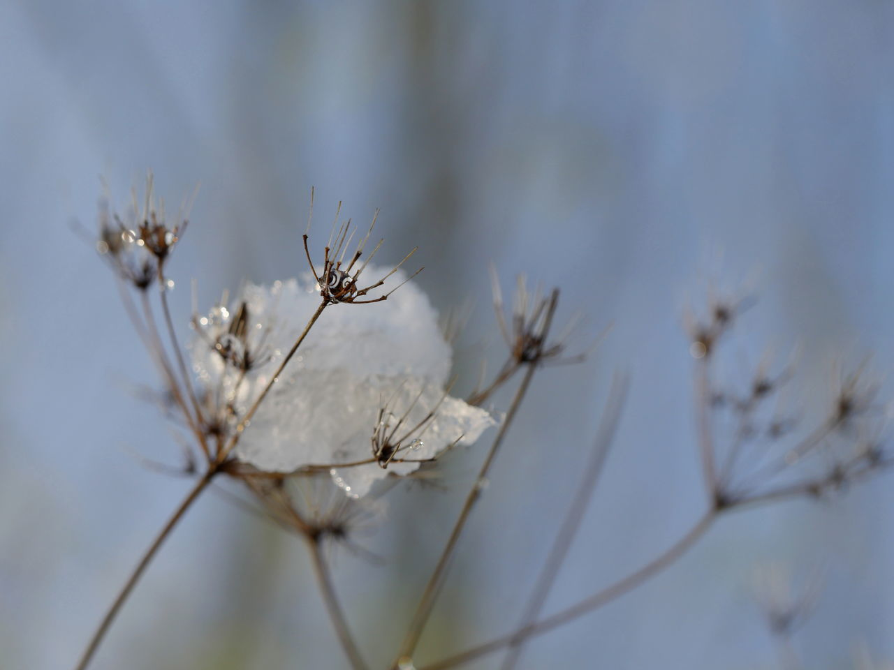 Beauty In Nature Blurred Background Cold Temperature Dried Plant Drops Filigran Fragility Macro Nature No People Outdoors Perspective Sky Snow Wintertime From My Point Of View Close-up Frozen Nature Check This Out Close Up Taking Photos Frosty Reflection
