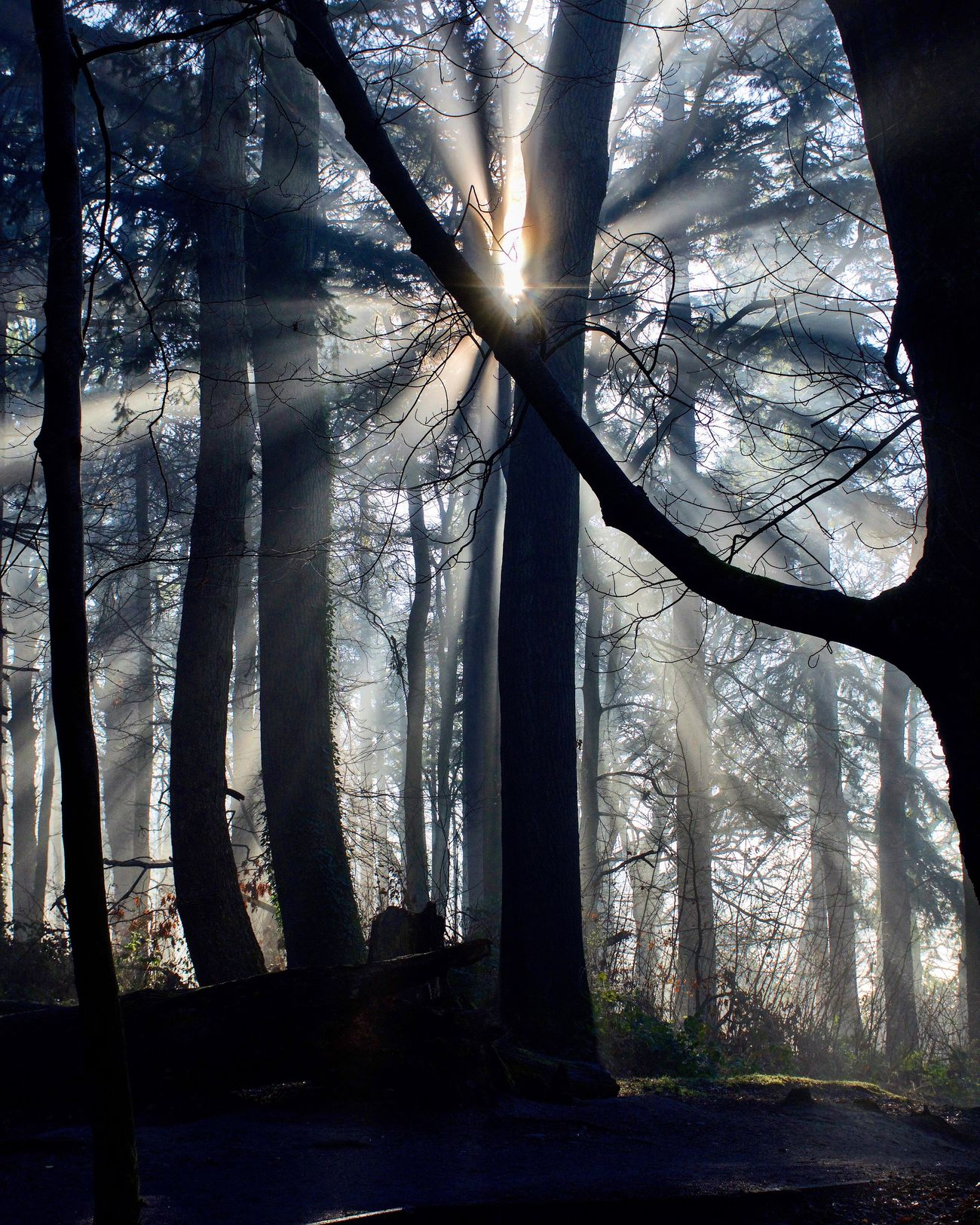 Tree Tree Trunk Forest Nature Sunlight Sunset Tranquility Branch Sunbeam Tranquil Scene Beauty In Nature No People Sun Scenics Outdoors Landscape Day Sky Forest Wood Rays Of Light Nikon