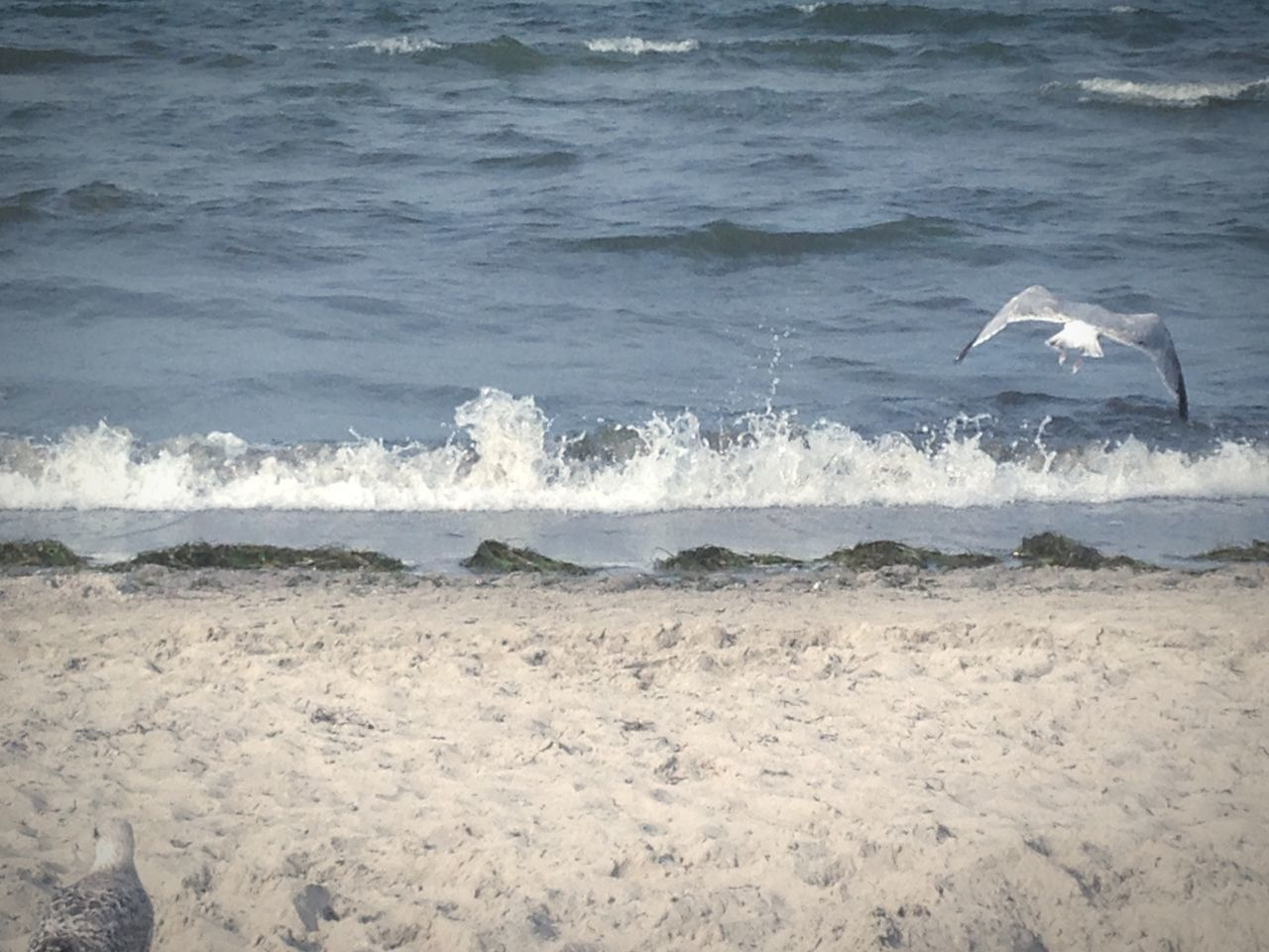 sea, nature, water, beach, bird, wave, motion, sand, day, one animal, animal themes, animals in the wild, beauty in nature, no people, outdoors, spread wings, flying, sky