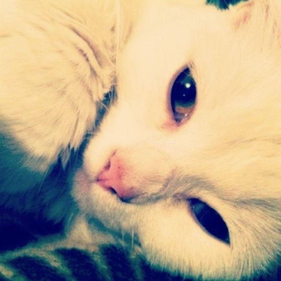 Balli böcek maya Kedi Cat Mayukhan Benimkedim