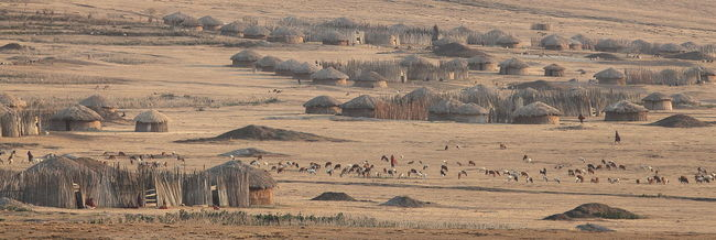 Massai village Bulati, Tanzania Agriculture Arid Climate Desert Flock Of Goats Flock Of Sheeps Geology Landscape Life In A Massai Village Life In Village Massai And Cows Massai Land Massai Shepherd Massai Village Ngorongoro Highland Physical Geography Rural Scene Tanzania Tranquil Scene Tranquility Travel Destinations Fine Art Photography
