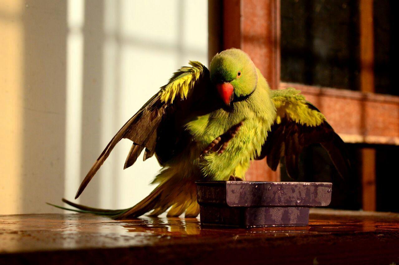 Beautiful Nature Beauty Noedit Parrot Love Mitho