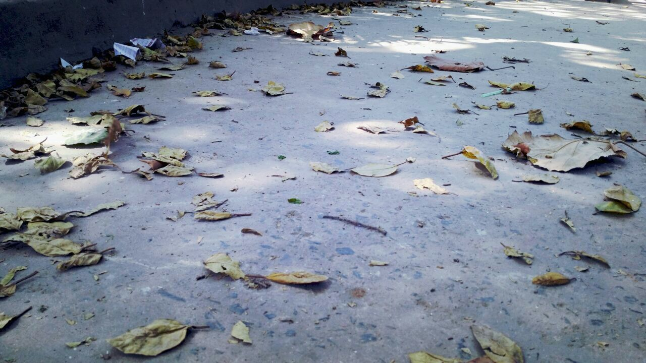 leaf, leaves, water, nature, no people, outdoors, autumn, day, large group of animals, puddle, oil spill, close-up