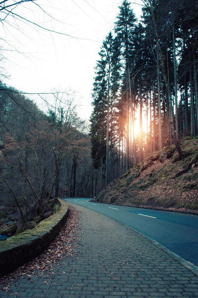 Bare Tree Beauty In Nature Branch Day Growth Lens Flare Mountain Müllerthal Nature No People Outdoors Road Road Scenics Sky Sun Sunbeam Sunlight Sunset Sunshine The Way Forward Tree Water Winding Road