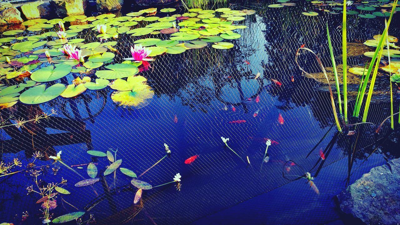 Kwiaty świata Outdoors Water Natura Natural Beauty No People Fish Animal Love Animal Photography Animal Themes Animals Animal_collection