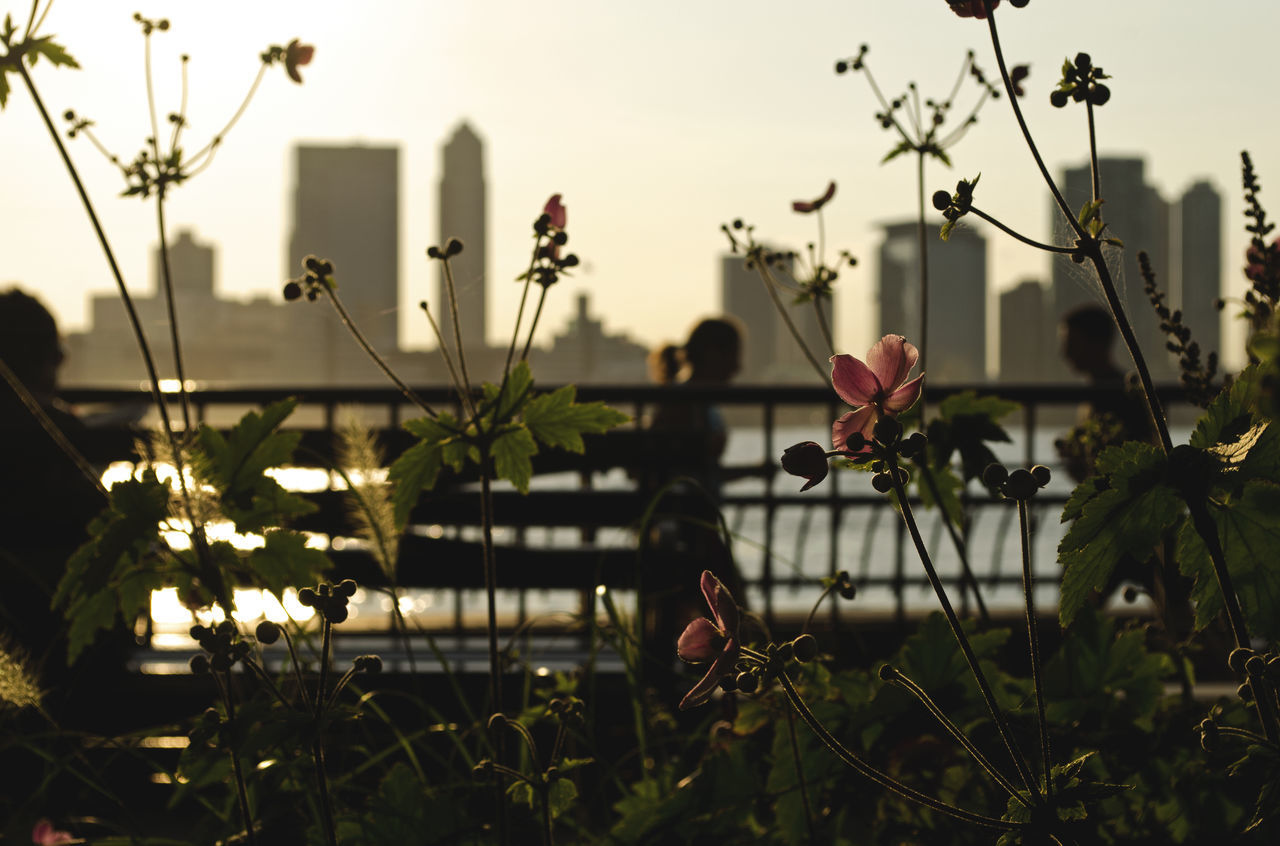 Beautiful afternoon at downtown Manhattan in summer time with the New Jersey skyline in the background and some people running at the coast. Afternoon Beauty In Nature City Cityscape Coast Day Flower Focus On Foreground Freshness Manhattan Nature New Jersey New York New York City NY NYC Outdoors Plant Run Running Silhouette Sport Urban The Street Photographer - 2017 EyeEm Awards EyeEmNewHere Live For The Story