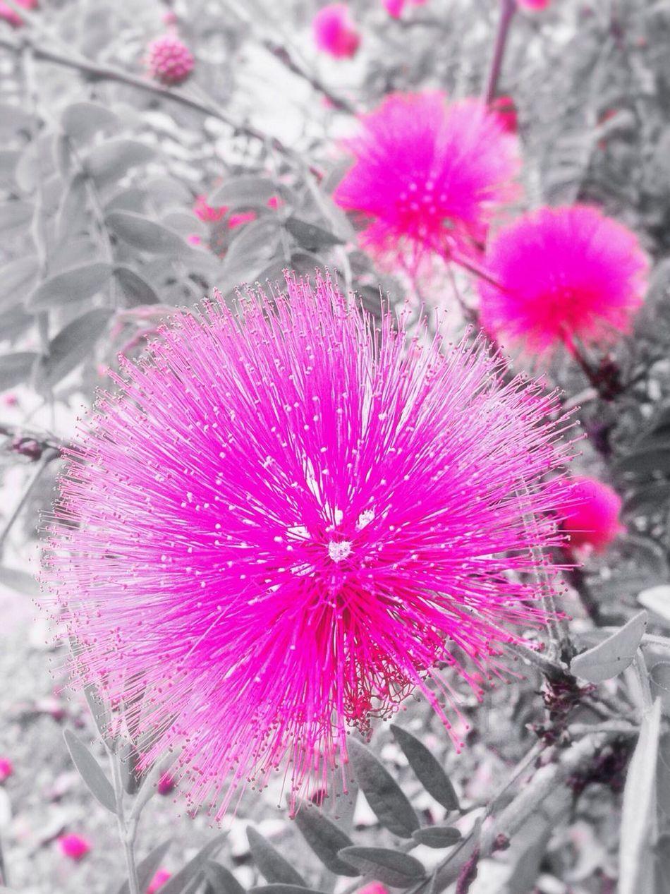 ?✨?Just Pink Nothing More Enjoying Life Relaxing ..i Wanna Seem Simple.. Naturefun