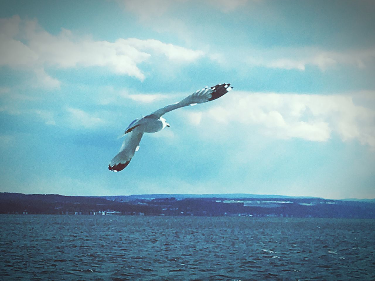 Bird Sky Cloud - Sky Flying Sea Nature Animals In The Wild Tranquility Scenics Animal Themes Seagull Water Outdoors Beauty In Nature One Animal Day No People Freedom Full Length