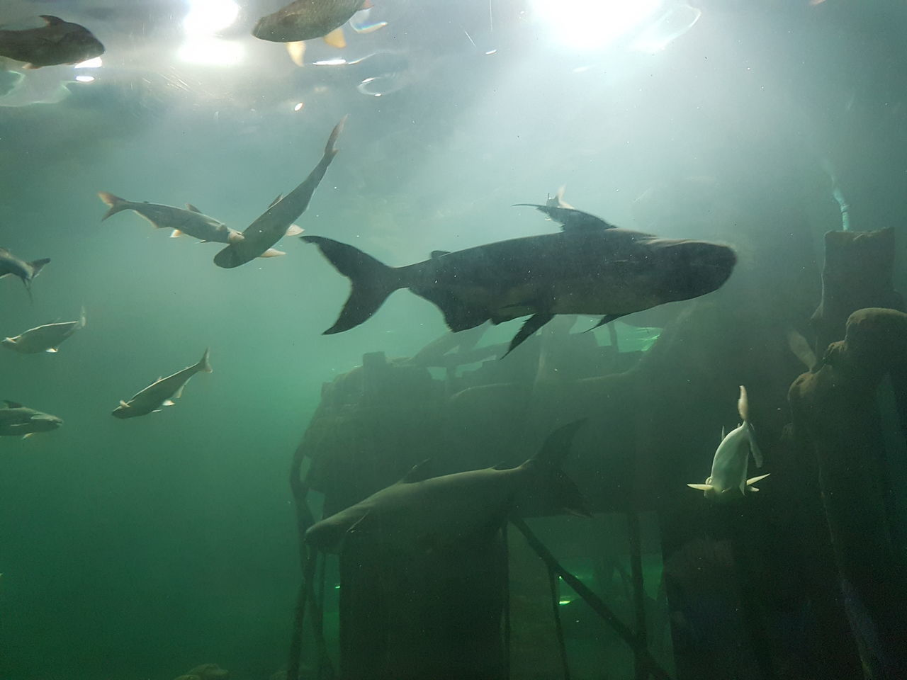 animal themes, fish, swimming, sea life, large group of animals, animals in the wild, underwater, water, animal wildlife, nature, undersea, real people, indoors, beauty in nature, aquarium, day