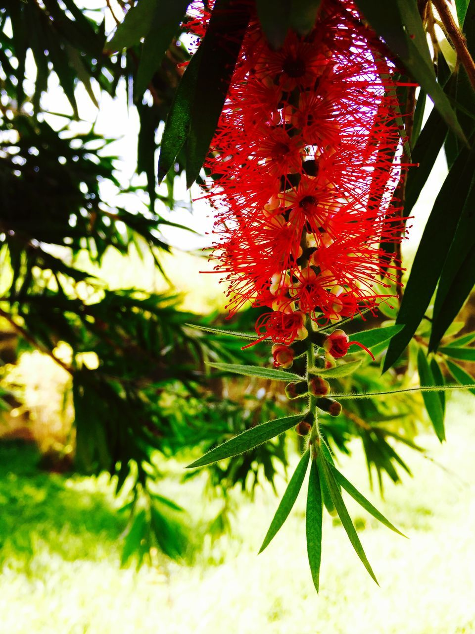 growth, tree, red, nature, beauty in nature, outdoors, plant, day, branch, green color, no people, leaf, close-up, freshness