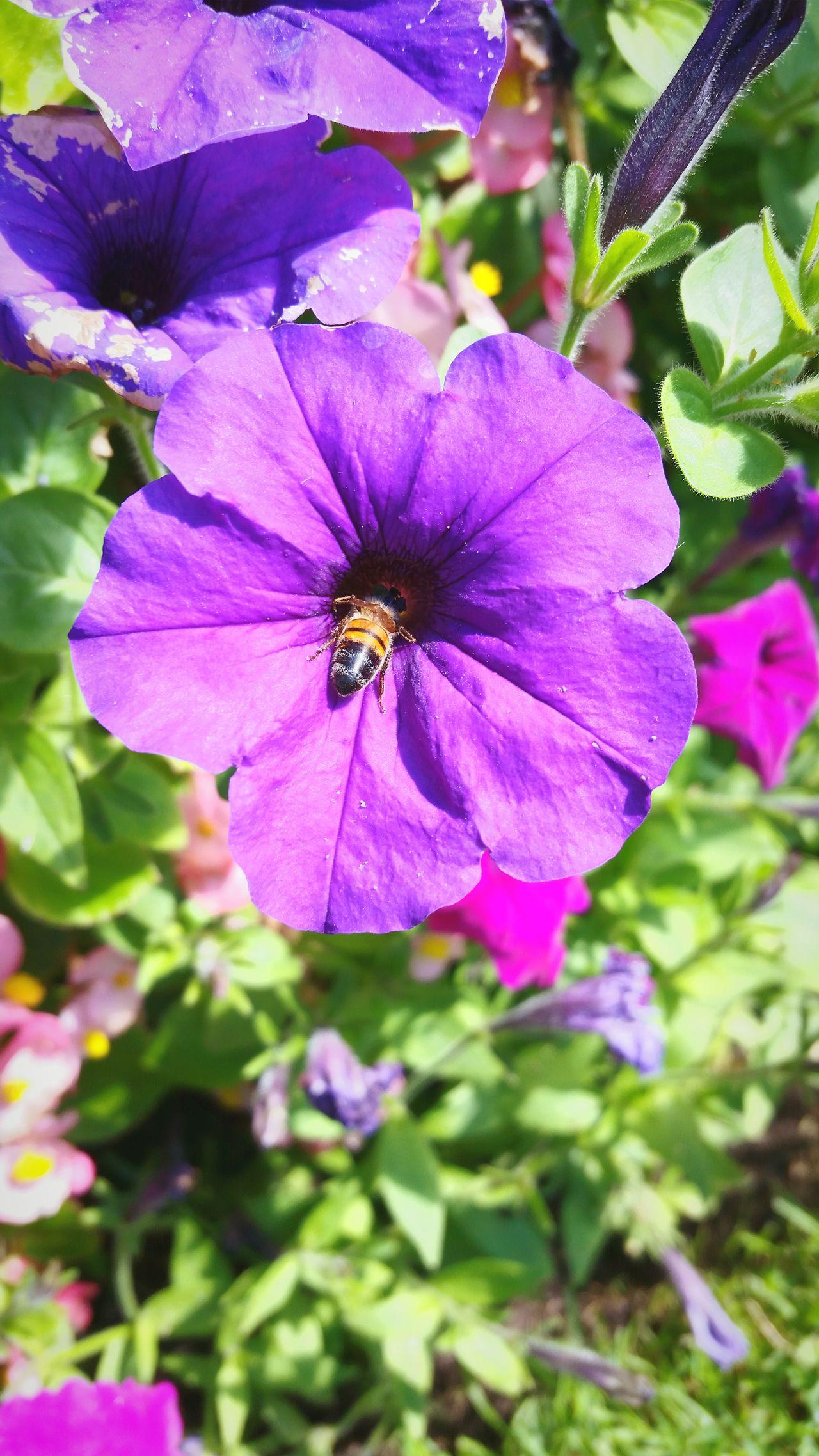 Flower Bee Nature Garden Natureinaction Purple