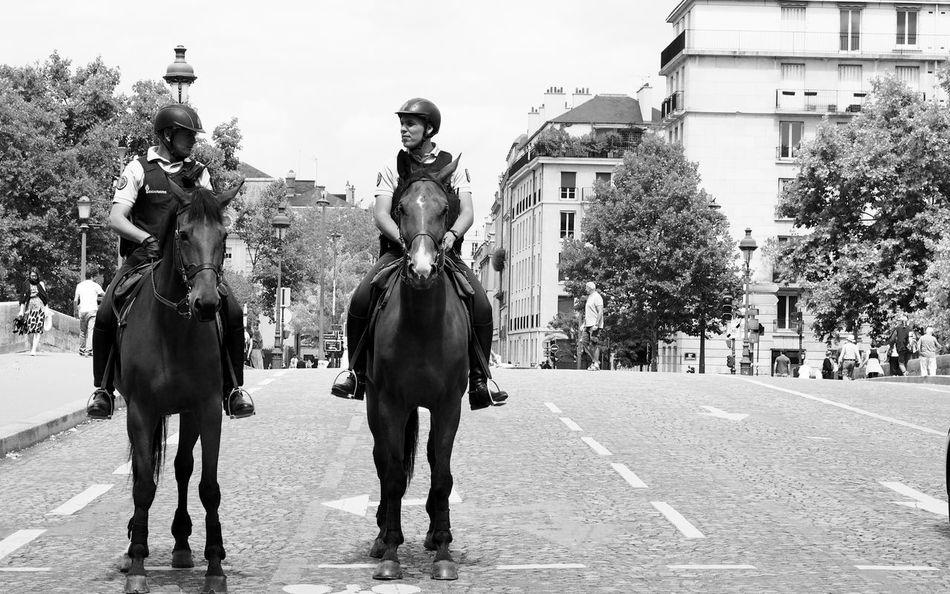 Horses in Paris Urban Police Paris, France  Horse Domestic Animals Outdoors Tree Riding Horseback Riding Day