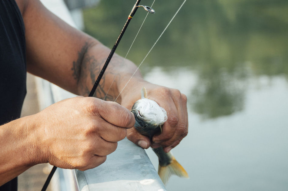 Beautiful stock photos of engel,  Catch Of Fish,  Close-Up,  Day,  Fish