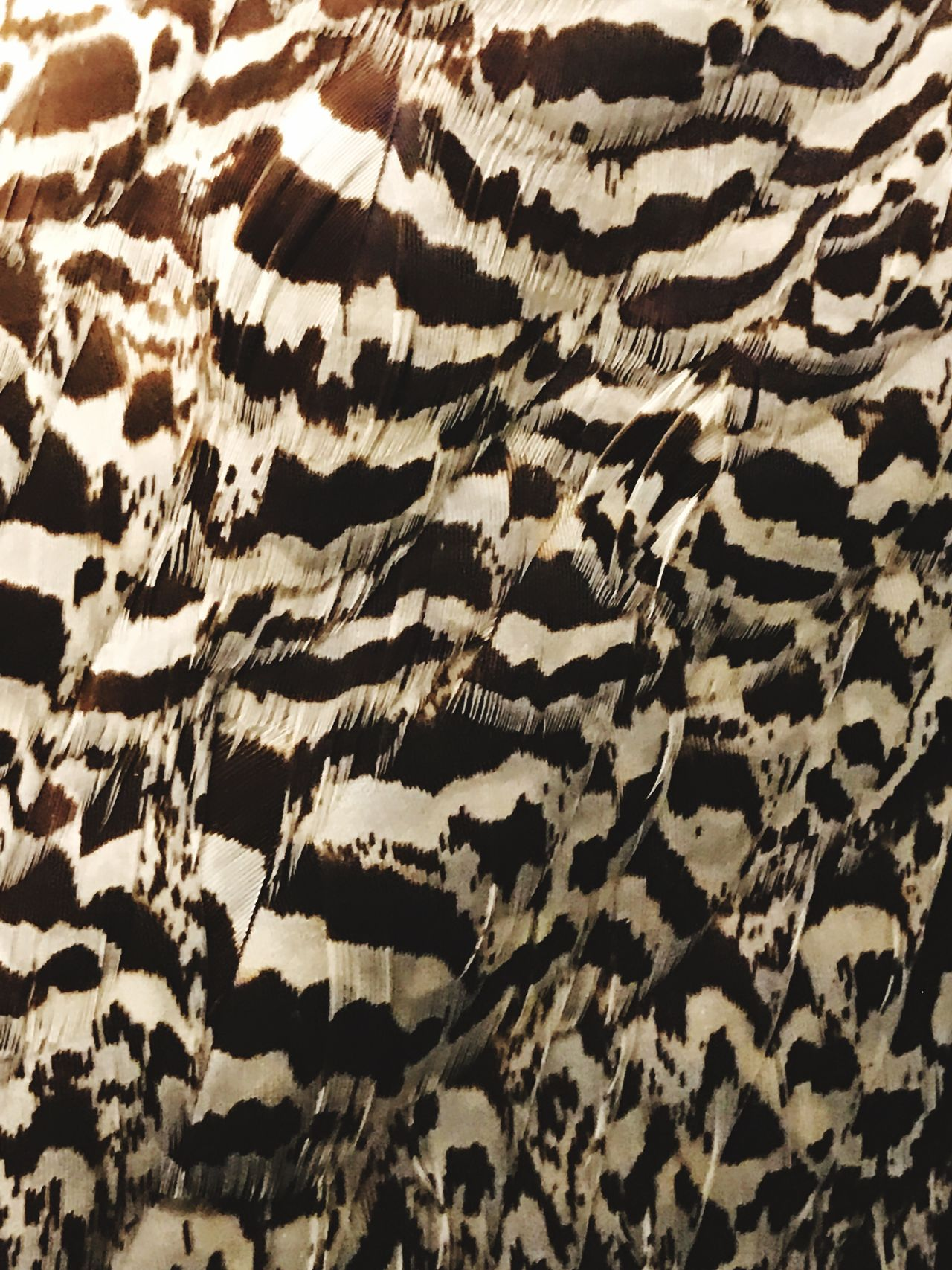 Pattern Textile Backgrounds Textured  Striped Abstract Black Color Material Full Frame No People Nature Close-up Mammal Day