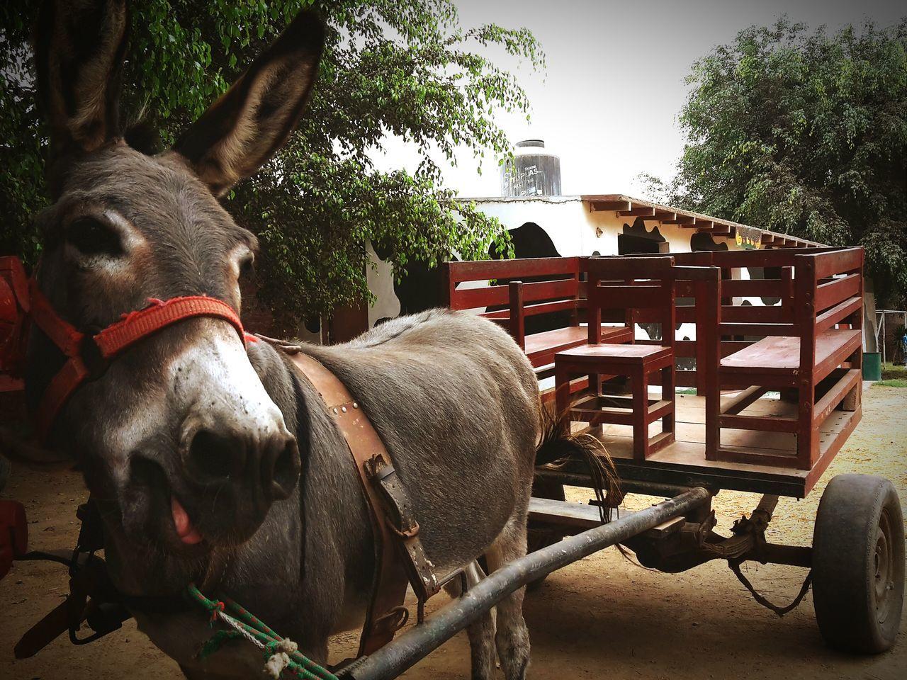 Beautiful stock photos of farm, Animal Themes, Cart, Clear Sky, Close-Up
