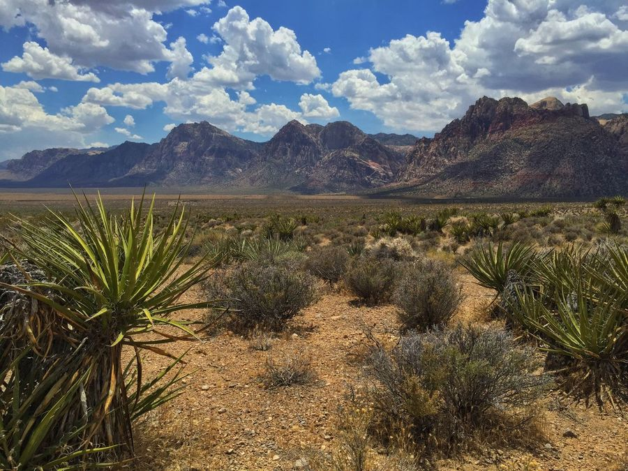 Hiking at Red Rock Canyon. Hikingadventures Desert Desert Beauty Las Vegas Nevada Nice Views Photo Contest Best IPhone Photos IPhoneography