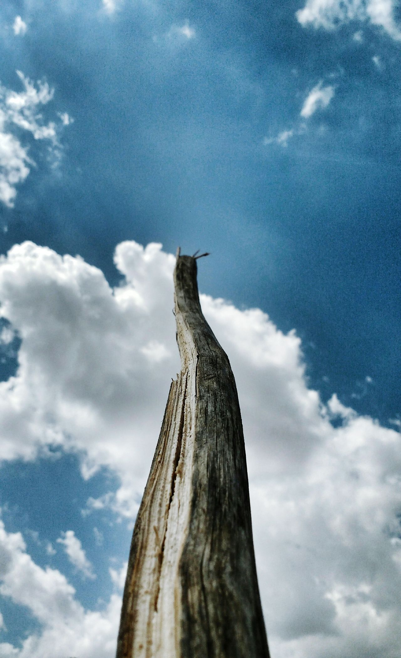 Stick to the sky Stick Wood Nature Sky Céu Cloud - Sky Heaven Brazil Natural Beauty Brazil ❤ Brasilnature Brasil ♥ Brazil