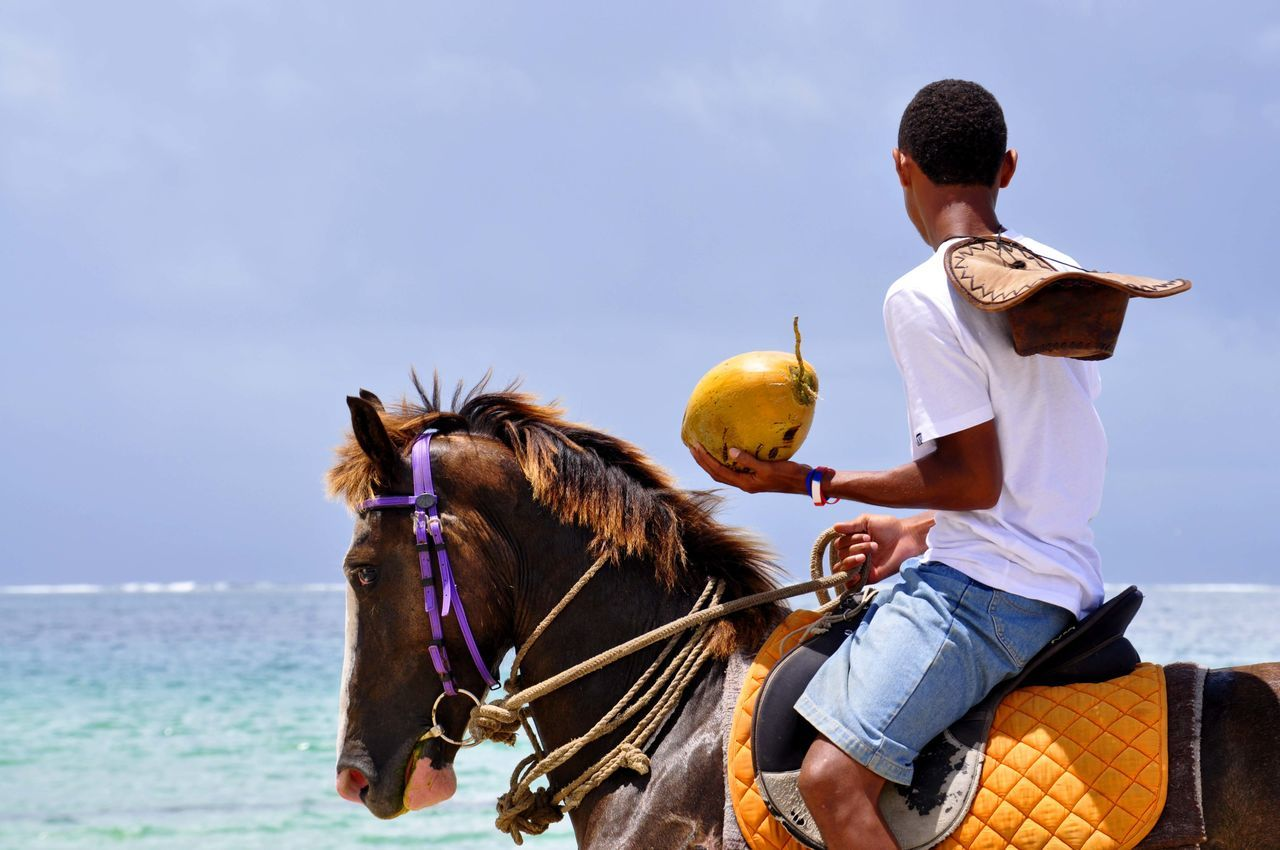 Beautiful stock photos of cowboy, Adult Animal, Animal Themes, Beach, Beauty In Nature