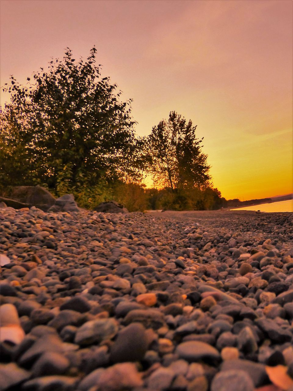 sunset, nature, tree, surface level, beauty in nature, outdoors, tranquil scene, pebble, scenics, tranquility, no people, sky, landscape, pebble beach, clear sky, day