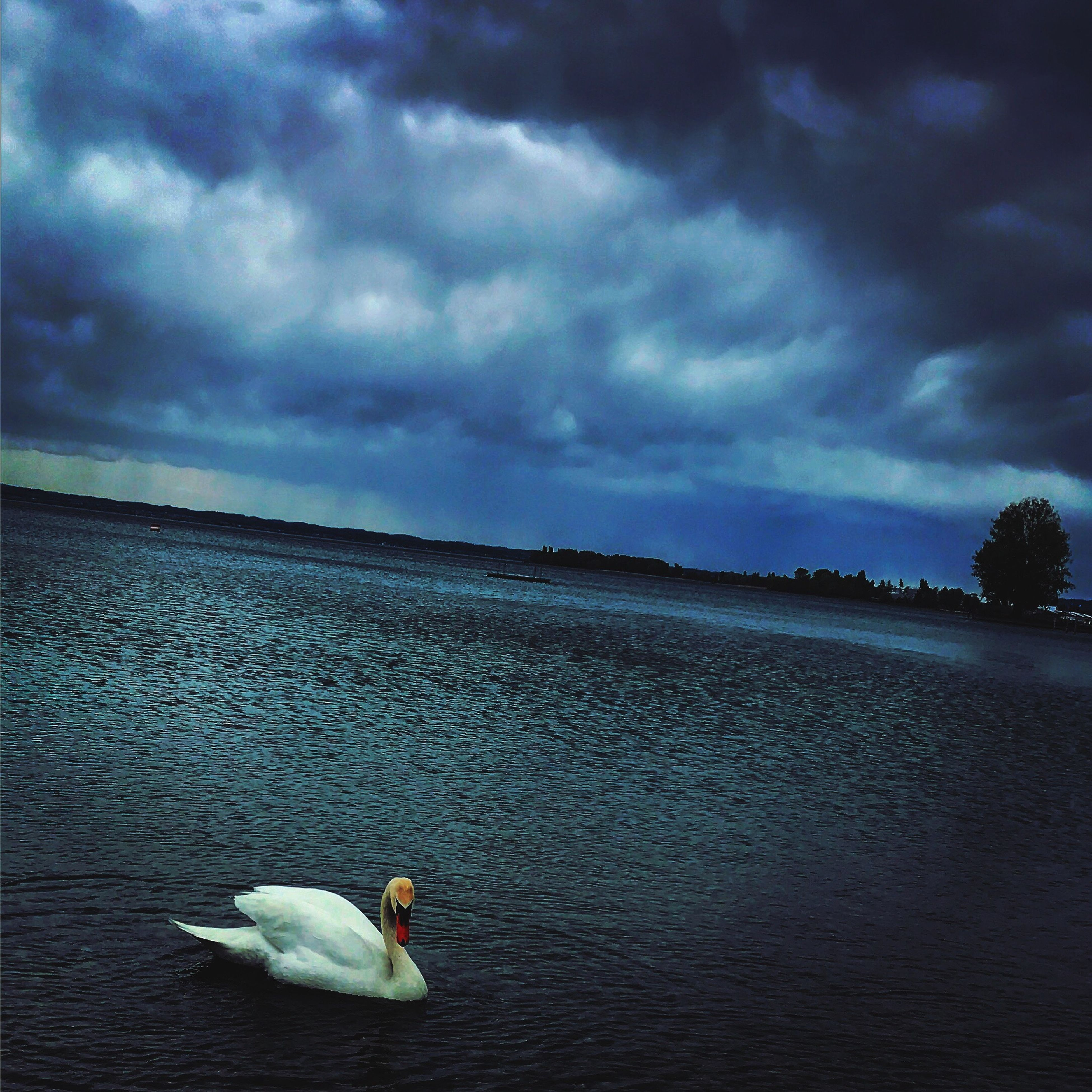 sky, cloud - sky, water, nature, one animal, animal themes, sea, outdoors, beauty in nature, swan, animals in the wild, no people, bird, day, scenics, swimming, horizon over water