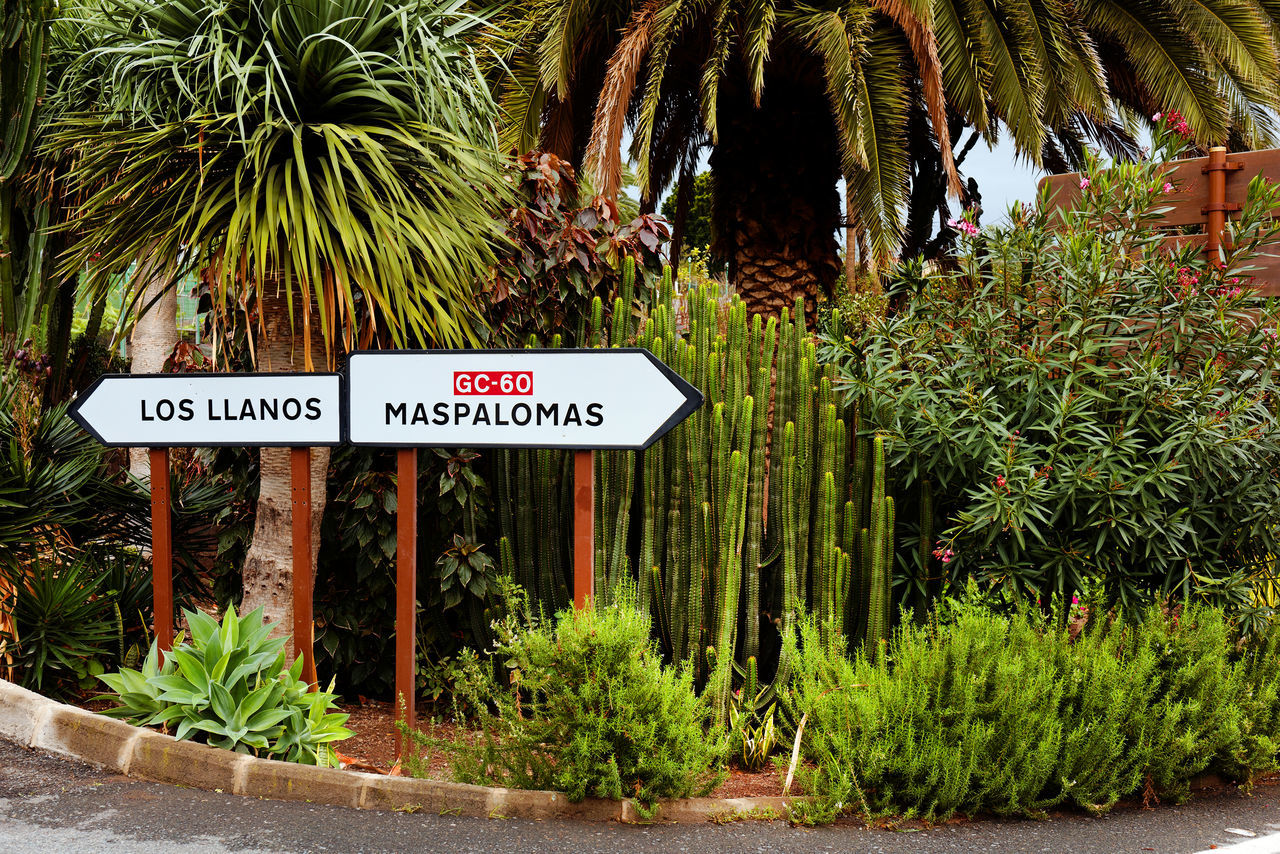 Directional Signs Amidst Plants At Roadside