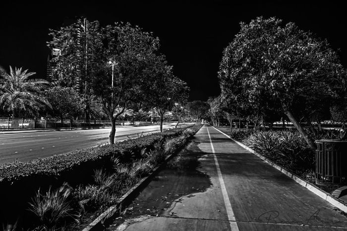 Outdoors Night Tree No People Sky Nature Pixelated Fragility Inspiration Low Angle View Black Blackandwhite Blackandwhitephotography Road Street Pavement Nightphotography Lights Night Sky Celebration Life Alone Alone Time Alone In The City