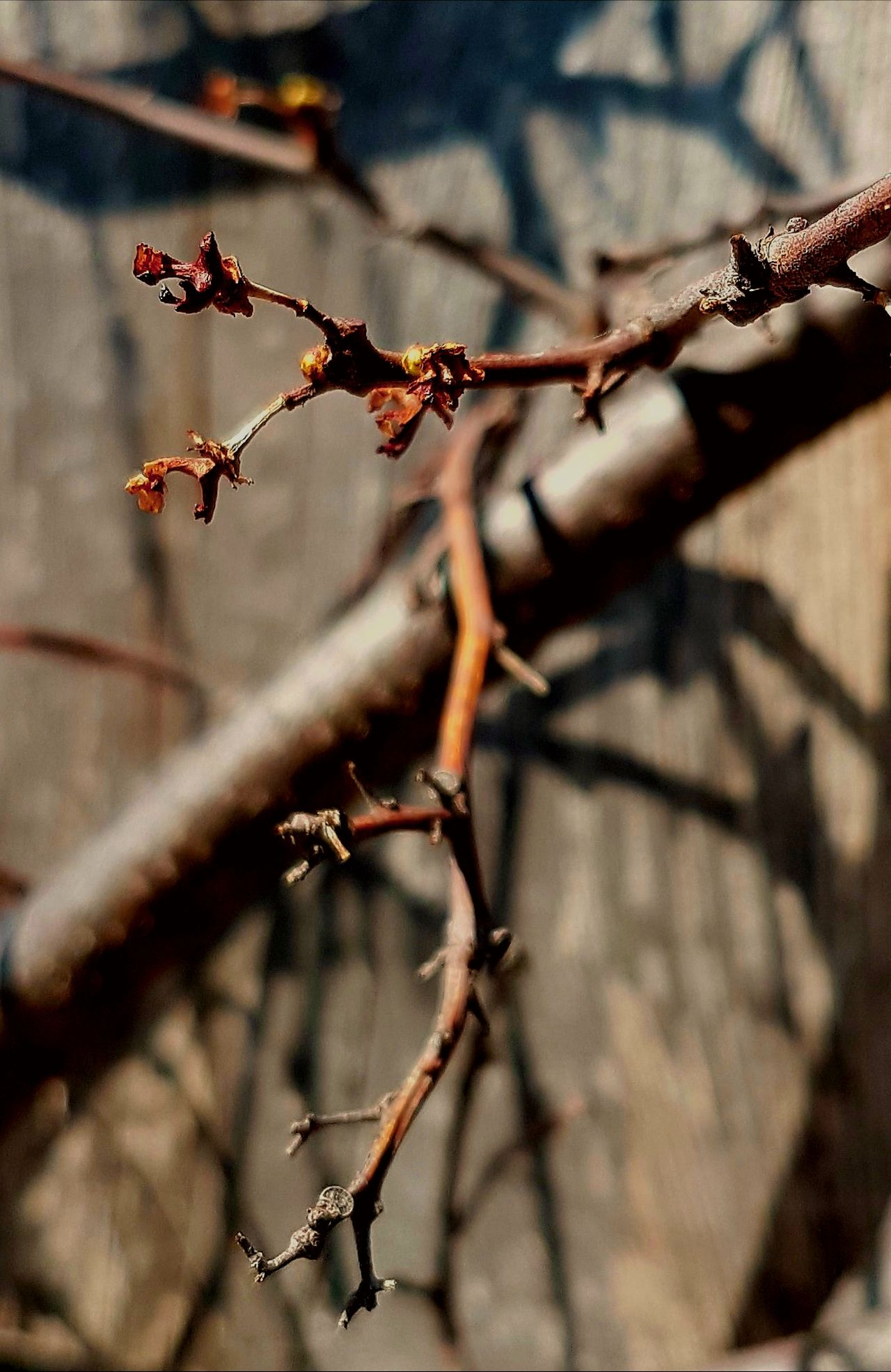 Branches And Shadow Branches No Leaves Early Spring 2017 Bare Branches Twig No People Close-up Outdoors Nature