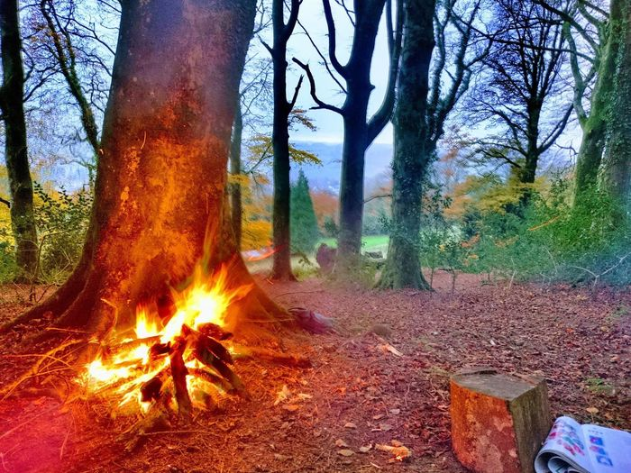 Tree Forest Tree Trunk Nature Burning WoodLand No People Forest Fire Day Outdoors Plant Landscape Growth Branch Bare Tree Beauty In Nature Sky