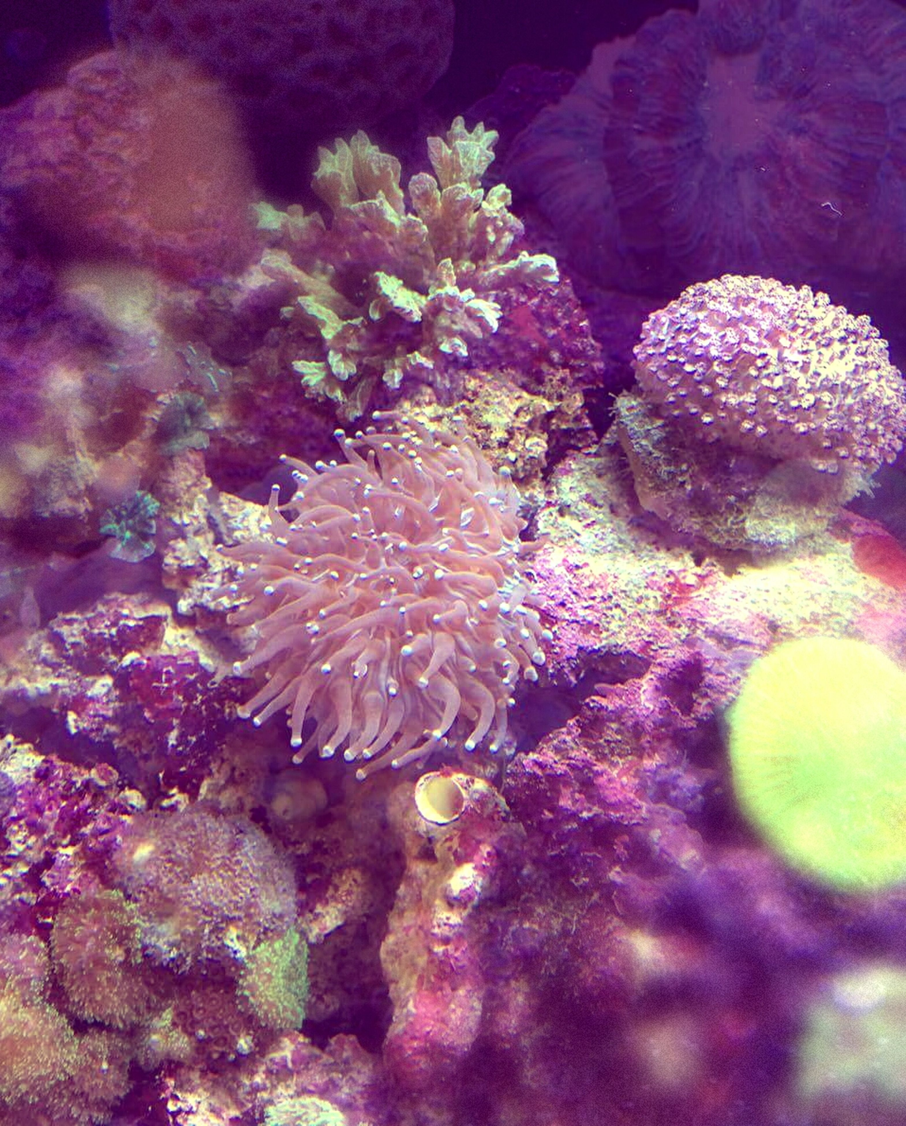 underwater, sea life, undersea, coral, animal themes, fish, nature, animals in the wild, swimming, beauty in nature, water, close-up, wildlife, aquarium, sea, rock - object, natural pattern, high angle view, no people