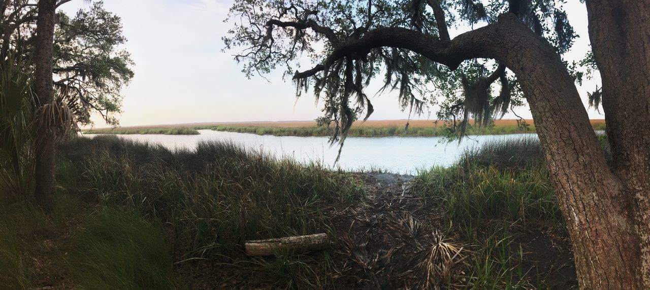 Beautiful start to a long weekend. Grass Tree Nature Growth Water Outdoors Tranquility Tree Trunk Beauty In Nature Tranquil Scene Lake No People Day Scenics Landscape Sky River Hike Savannah Georgia Ogeechee River Moss The Secret Spaces