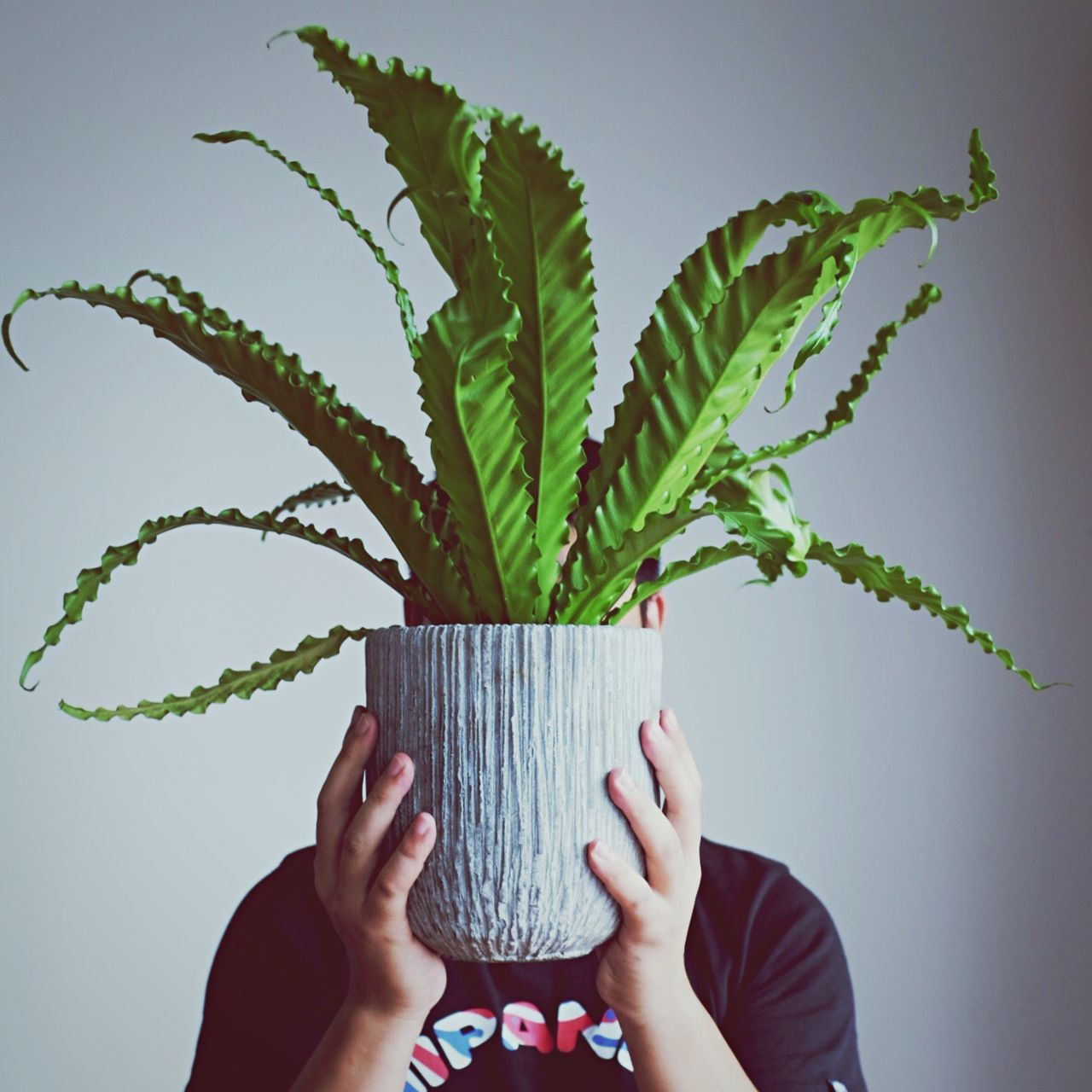Beautiful stock photos of environment, plant, holding, green color, growth