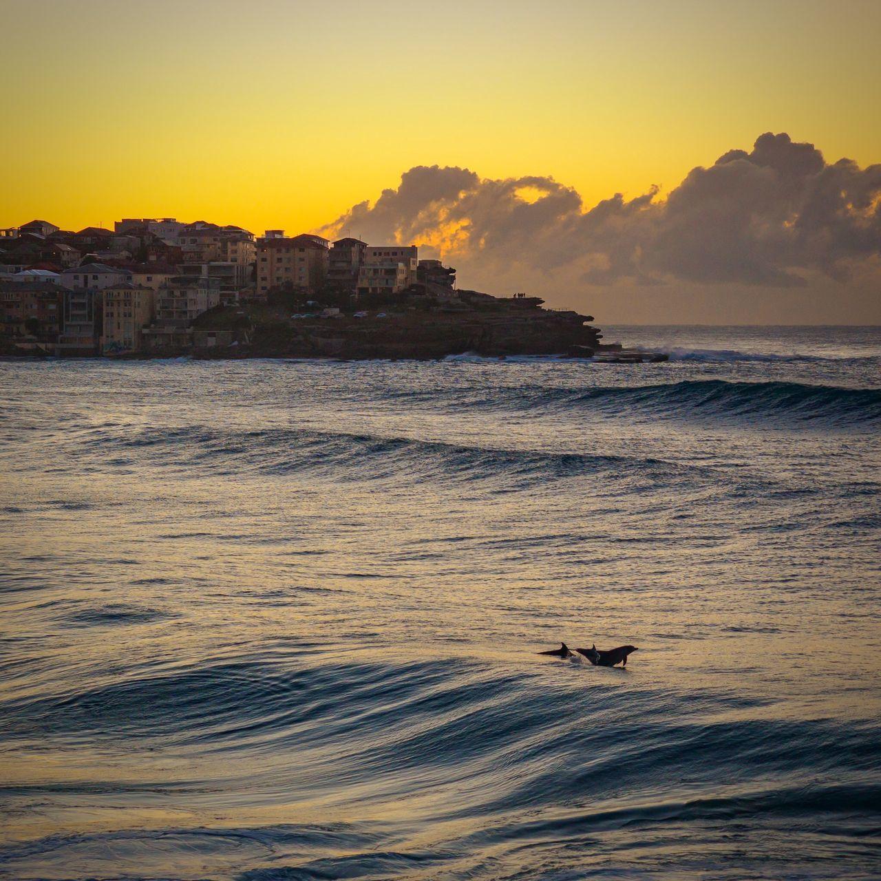 Dolphin Photobomb 🐬💣🐬 at Bondi Yesterday Morning. #olympusinspired Dolphins Bondi Ocean