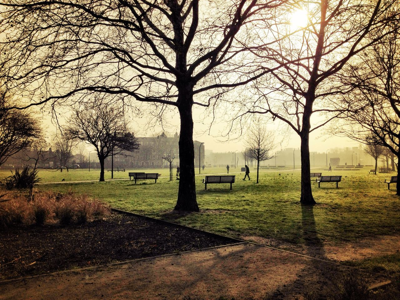 Beautiful stock photos of park, Bare Tree, Beauty In Nature, Branch, City of London