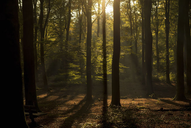 Photographing forests is so difficult for me... I always end up having a contrastless image, this one actually worked out nice :)! Beauty In Nature Day Fog Forest Horizontal Landscape Nature Netherlands No People Outdoors Scenics Sun Sunlight Sunlight Sunset Tree Tree Trunk Veluwe WoodLand