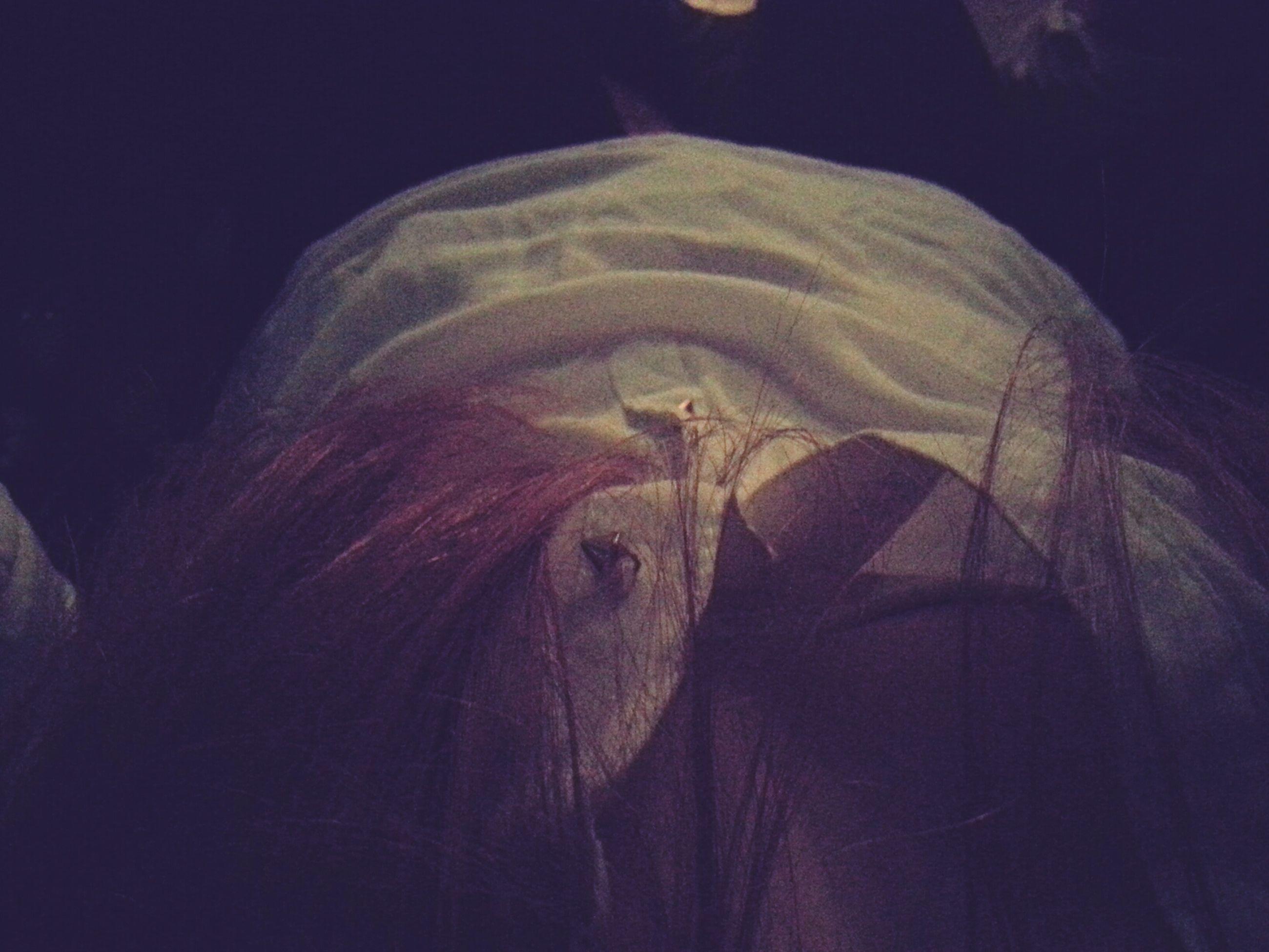 animal themes, close-up, one animal, indoors, underwater, black background, studio shot, wildlife, animals in the wild, fish, no people, night, sea life, undersea, nature, swimming, animal head, animal body part, horse, animal representation