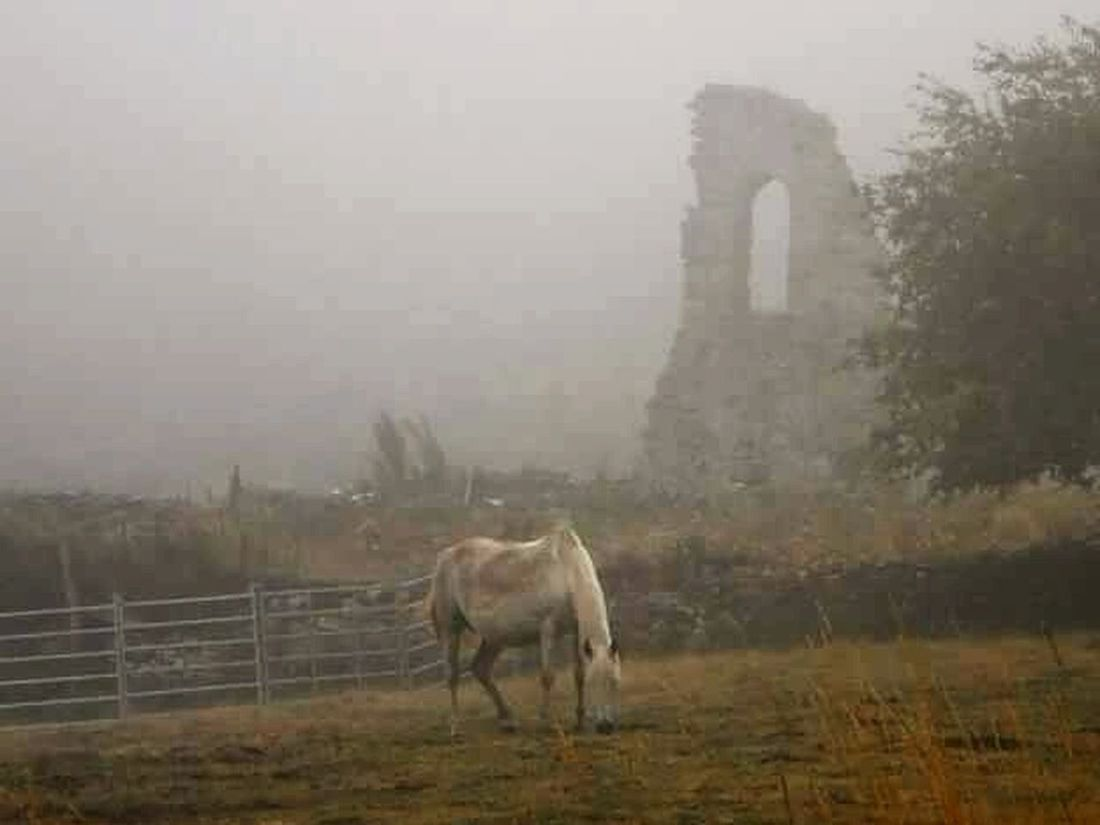 Around The World Traveling Animal_collection Horses Fog In The Trees Foggy Morning Wild Horses CaminodeSantiago Spectral Place Share Your Adventure