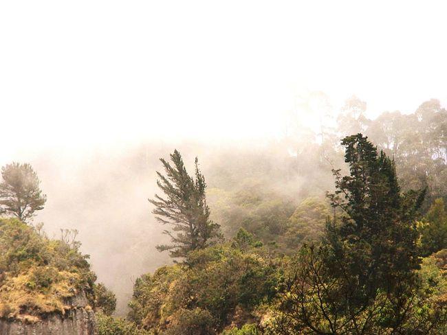Nature Trees Foggy Morning Foggy Kodaikanal Vacation Traveling Travel Photography Lanscape Lamdscapes With Whitewall