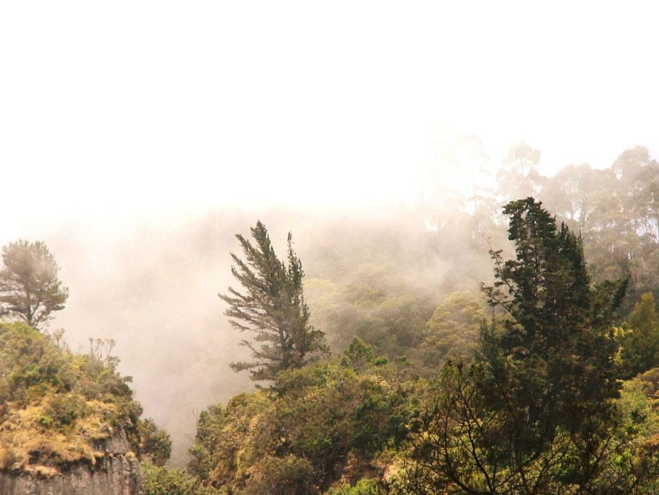 Nature Trees Foggy Morning Foggy Kodaikanal Vacation Traveling Travel Photography Lanscape Lamdscapes With Whitewall