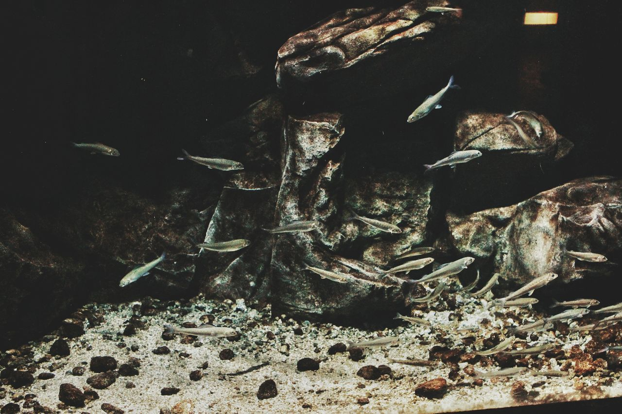 fish, no people, animal themes, animals in the wild, indoors, aquarium, underwater, sea life, close-up, large group of animals, nature, swimming, water, undersea, day