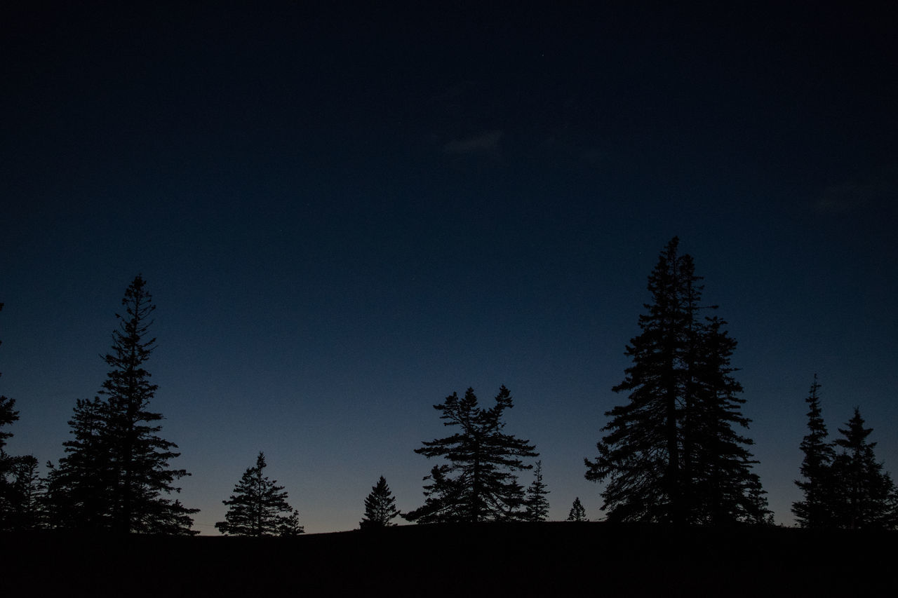 Twilight Beauty In Nature Blomidon Canada Clear Sky Forest Growth Nature No People Outdoors Pine Tree Scenics Silhouette Sky Tranquility Tree
