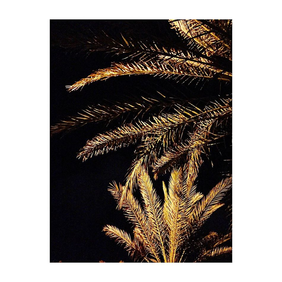 Djerba  Tunisia Tunisie Midoun Palmier  Palm Gold Goldpalm Or Viewfrommywindow Viewfrombalcony Holidays Bedroom Bedroom View