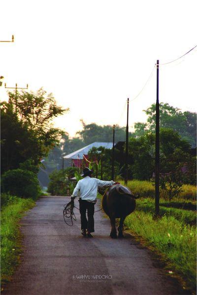 Friendly Indonesian Minangkabau Rancak Nature Photography Indoesian Culture Animal Lover