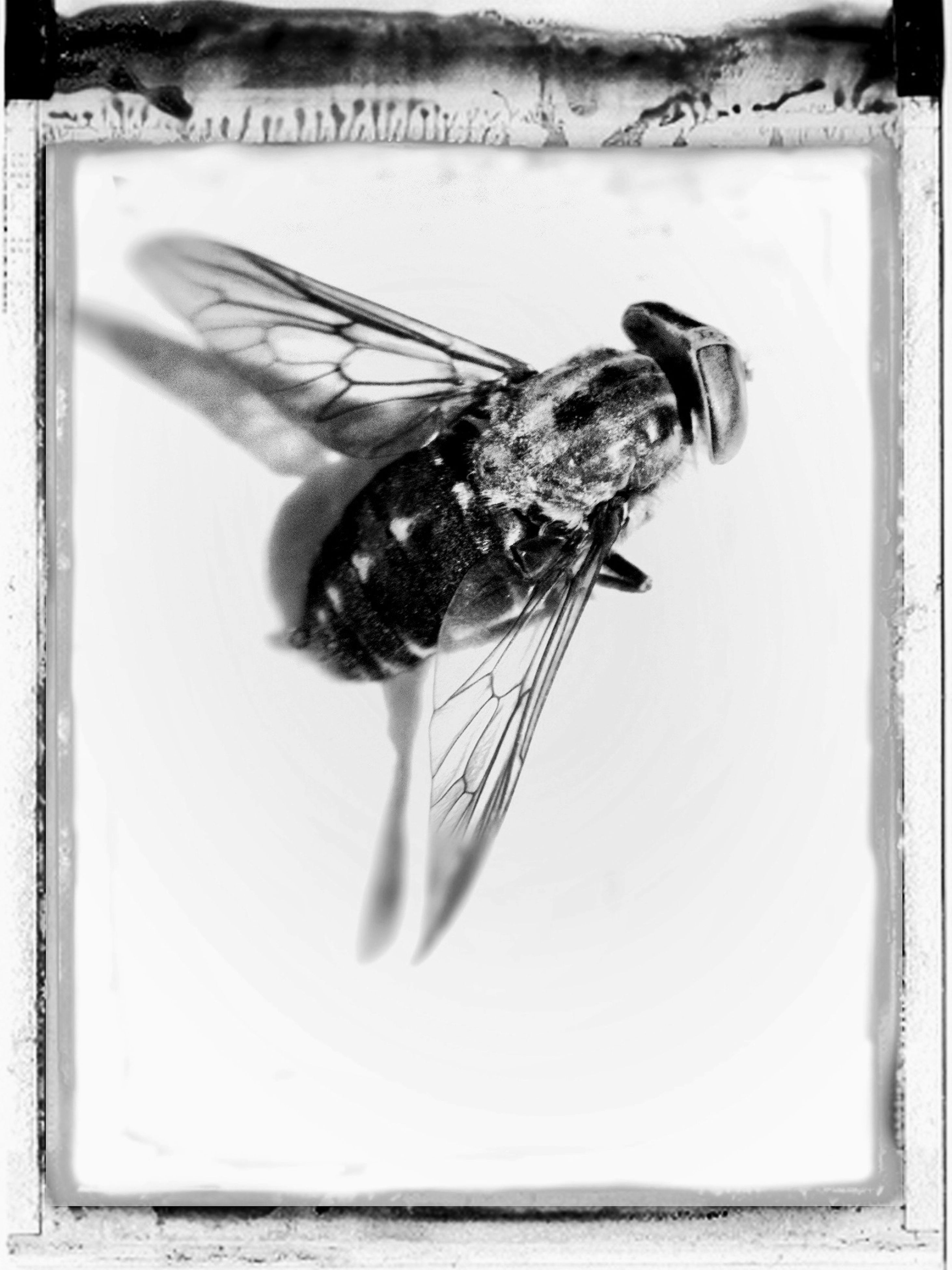 indoors, close-up, one animal, auto post production filter, transfer print, animal themes, day, water, reflection, part of, wood - material, front view, wildlife, dead animal, person, holding
