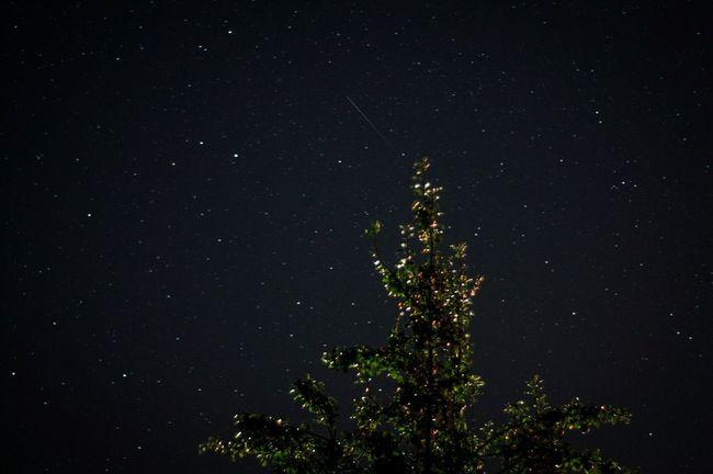 Night Tree Star - Space Sky Nature Majestic Astronomy Galaxy Space Outdoors Dark Star Field Stars Ночь звезды звездноенебо звездопад Novgorod NovgorodtheGreat