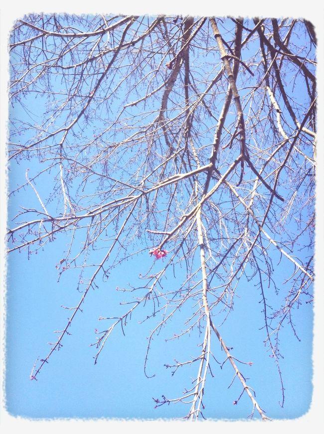 Spring Awaits Us :)