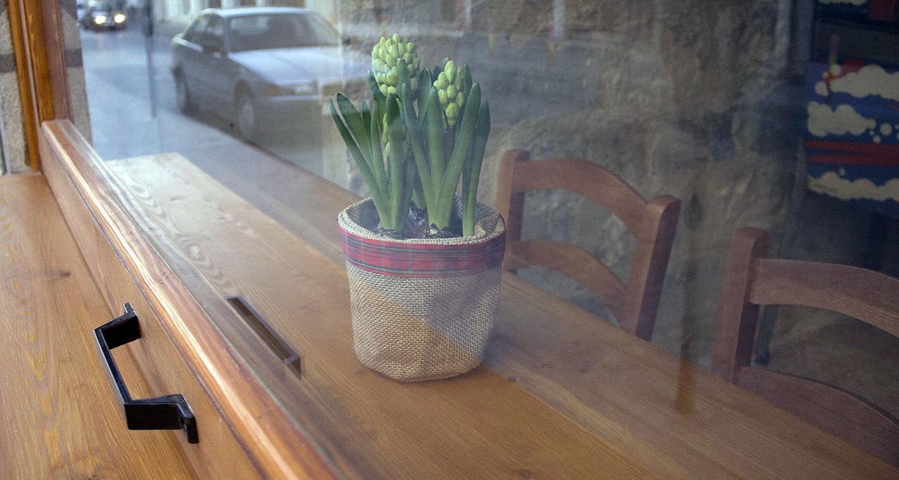 Potted Plant On Sill Seen Through Window