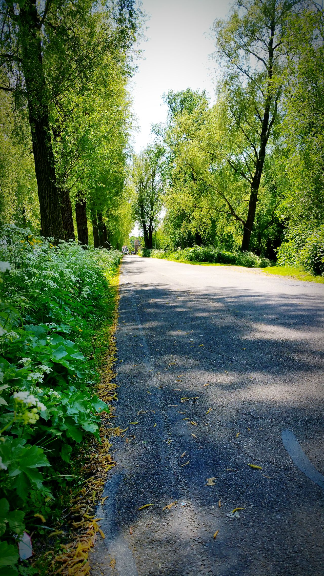 The Great Outdoors With Adobe Long Road... Green Nature Trees And Bushes Walking Home Dordrecht The Netherlands