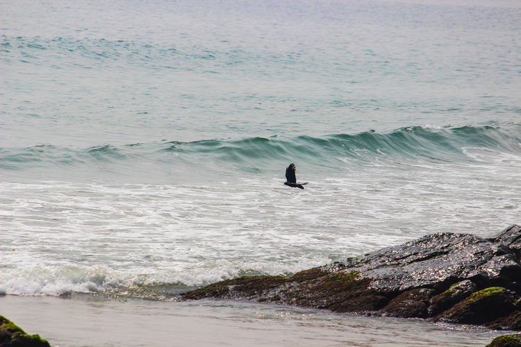 THE CROW IS FLYING OFF FROM THE CLIFF Crow Flying Off Surfing Sea Nature Wave Water Beach Beauty In Nature Day Motion