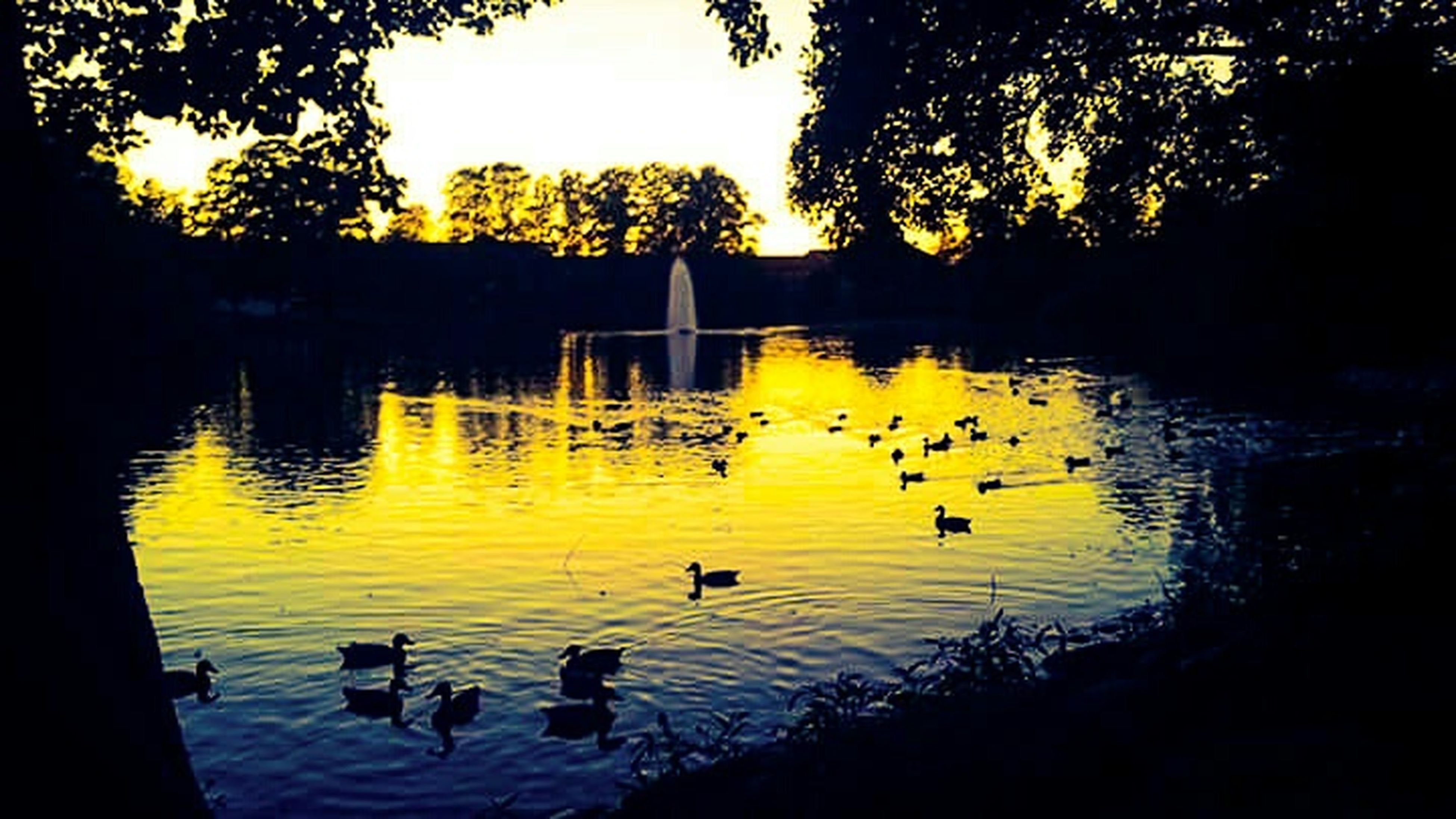 bird, animal themes, animals in the wild, wildlife, water, lake, duck, reflection, swimming, tree, flock of birds, nature, sunset, medium group of animals, river, waterfront, perching, water bird, beauty in nature