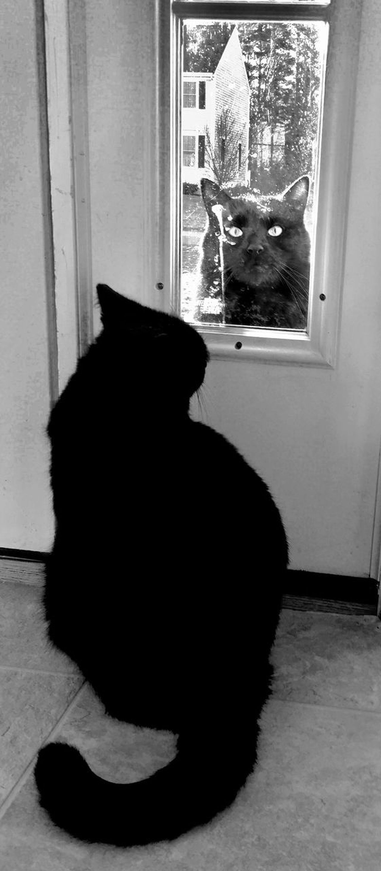 Unhappy Cat Window Sitting Indoors  Domestic Animals Animal Themes Pets Domestic Cat Cats Of EyeEm Cats Cat♡ Cats 🐱 Black Cats Black Cats Are Beautiful